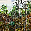 Croatan Forest 1 by Micah Mullen