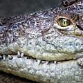 Crocodile Eye by Emma England