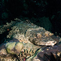 Crocodile Fish On Coral by Mumbles and Grumbles