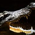 Crocodile by Scott Hovind