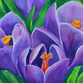 Crocus Flowers by Olga Hamilton
