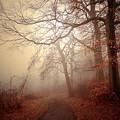 Crooked Path by Allan Cabrera