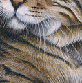 Cropped Cat 6 by Carol Wilson