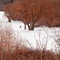 Crosscountry Skier by Utah Images
