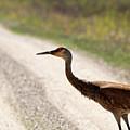 Crossing by Linda Kerkau