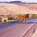 Crossing The Desert Road by Tatiana Travelways