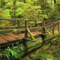 Crossing The Rainforest Ravine by Adam Jewell