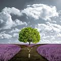 Crossroad In Lavender Meadow by Giordano Aita
