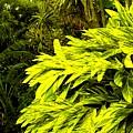Croton Cascading Down The Hillside by Ian  MacDonald