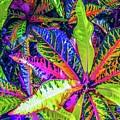 Croton Foliage by Louie Navoni