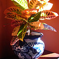 Croton In Talavera Pot by Amy Vangsgard