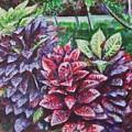 Crotons 1 by Usha Shantharam