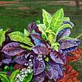 Crotons 2 by Usha Shantharam