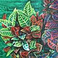 Crotons 3 by Usha Shantharam