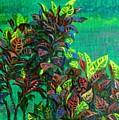Crotons 7 by Usha Shantharam