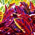 Crotons Sunlit 1 by Usha Shantharam