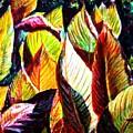 Crotons Sunlit 2 by Usha Shantharam
