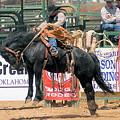 Crow Hopping Saddle Bronc by Cheryl Poland