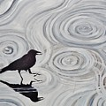 Crow In A Rain Puddle by Shannon Lee