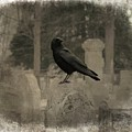 Crow In The Old Graveyard Mix by Gothicrow Images