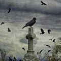 Crow Keeps Her Perch by Gothicrow Images