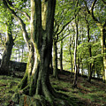 Crow Nest Woods by Philip Openshaw