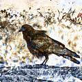 Crow On Blue Rocks by Carol Leigh