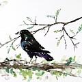 Crow On Branch by Carolyn Doe