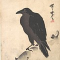 Crow Resting On Wood Trunk by Eastern Accent