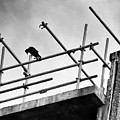 Crow Watches Over by Philip Openshaw
