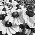 Crowded Flowers by Lori Seaman