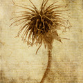 Crown Of Thorns by John Edwards