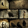 Crows And One Rabbit by Gothicrow Images