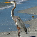 Cruising The Beach by Christiane Schulze Art And Photography