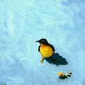 Crumbs -bird Painting by Linda Apple