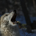 Cry In The Wild by Jeff Shumaker