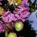 Crystal Earbobs 2 by Maxine Billings