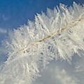 Crystal Perfection by Bob Berwyn