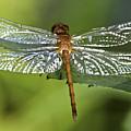 Crystal Wings by Evelina Kremsdorf