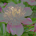 Crystalline Flower by Don Wright