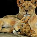 Cub Brothers by Stephanie Endsley