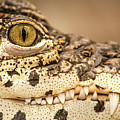 Cuban Croc Smile by Don Johnson
