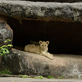 Cubs In Cave by Linda D Lester