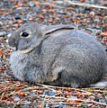 Cuddly Campground Bunny by Carol Groenen