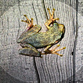 Cudjoe Key Frog by Susan Vineyard