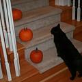 Curious Black Cat by Brad Nellis
