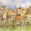 Curious Calves by Christine Burn