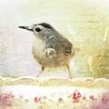 Curious Catbird by Tina LeCour