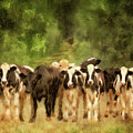 Curious Cows by Lois Bryan