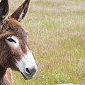 Curious Donkey by Enrico Crobu